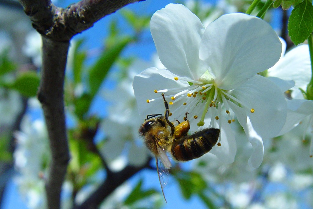 albina-culegand-polen-2270x1024